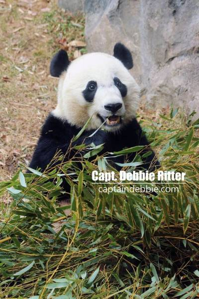 Photograph - Bei Bei 5767 by Captain Debbie Ritter