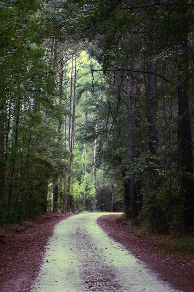 Photograph - Beidler Forest by Donna Bentley