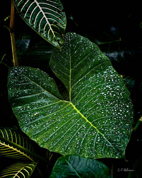 Photograph - Bejeweled Leaf by Christopher Holmes