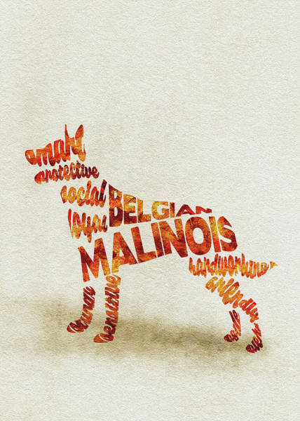 Painting - Belgian Malinois Watercolor Painting / Typographic Art by Inspirowl Design