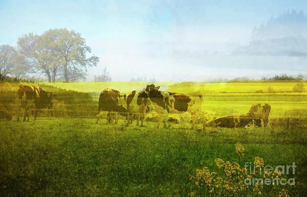 Photograph - Belgian Spring Landscape by Ariadna De Raadt