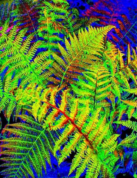 Ferns Digital Art - Bella Flora by Will Borden