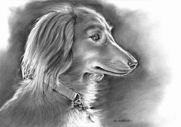 Charcoal Drawing - Bella by Tom Hedderich