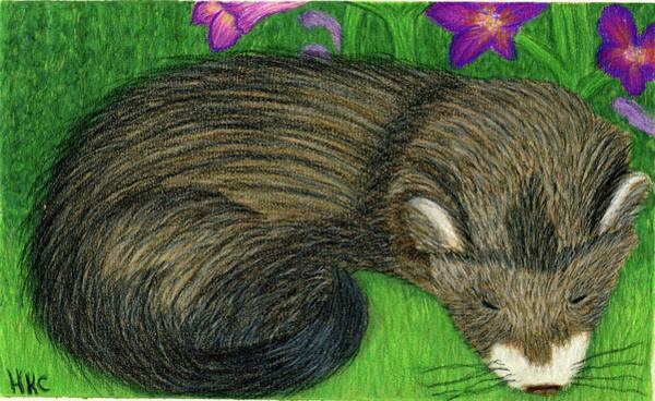 Ferrets Drawing - Belladonna by Heather Gorman