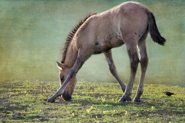 Photograph - Bella's Filly And A Friend by Belinda Greb