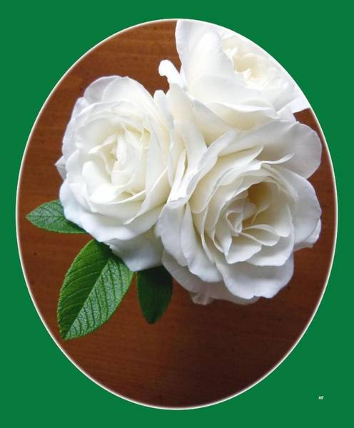 Flawless Photograph - Belles Roses Blanches by Will Borden