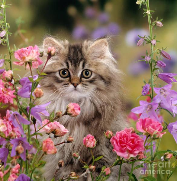 Photograph - Bellflower Beauty by Warren Photographic
