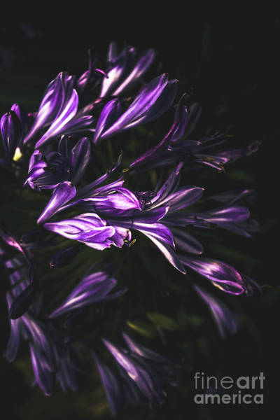 Dark Background Photograph - Bells And Flowers by Jorgo Photography - Wall Art Gallery