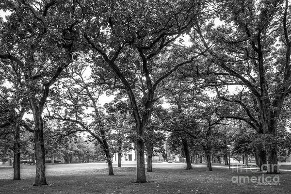 Photograph - Beloit College Oak Grove by University Icons
