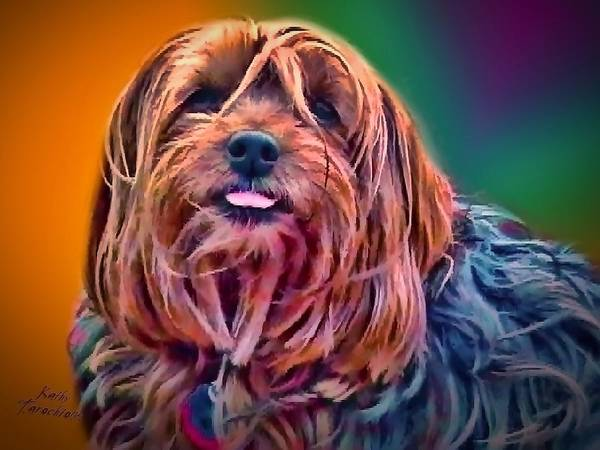 Photograph - Beloved Maggie by Kathy Tarochione