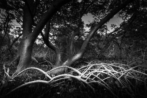Mangrove Wall Art - Photograph - Below The Canopy by Marvin Spates