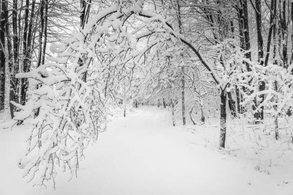Photograph - Below Winter Laden Branches by Chris Bordeleau