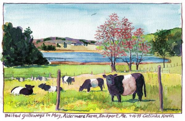 Painting - Belted Galloway Art  Maine Cows In May by Catinka Knoth
