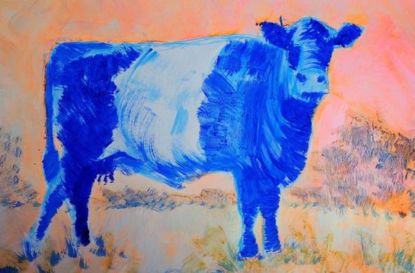 Painting - Belted Galloway Cow Against A Fiery Sky by Mike Jory