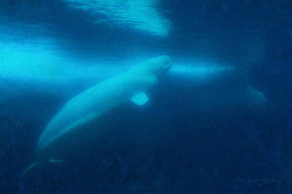 Painting - Beluga Whale Underwater by Bill McEntee