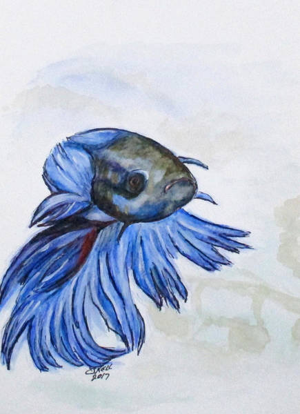 Painting - Ben Blue Betta Fish by Clyde J Kell