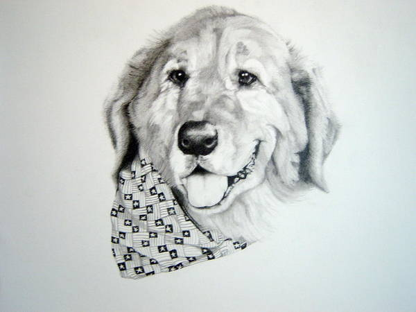 Golden Retriever Drawing - Ben by Trey Stephens