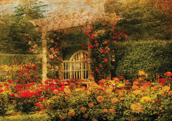 Photograph - Bench - The Rose Garden by Mike Savad