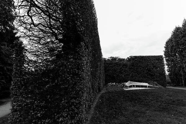 Wall Art - Photograph - Bench And Bush Fence In Black And White by Iordanis Pallikaras