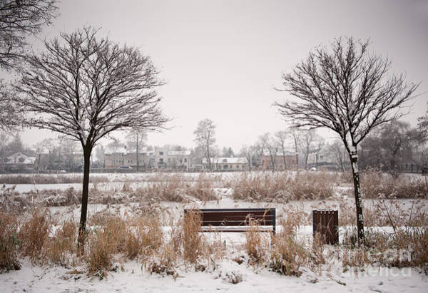 Wall Art - Photograph - Bench Between Two Trees In Winter by Arletta Cwalina