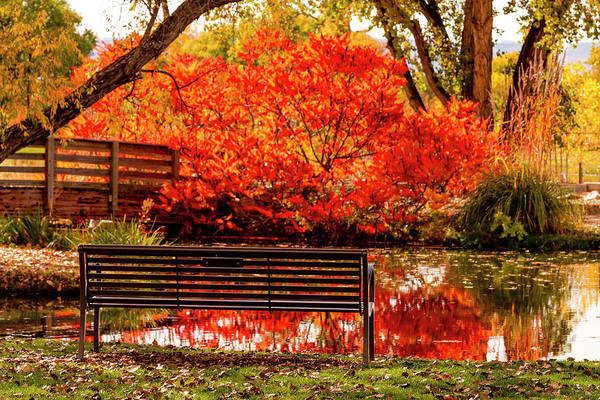 Photograph - Bench By The Pond by Teri Virbickis