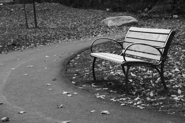 Photograph - Bench On The Walk by Rick Morgan