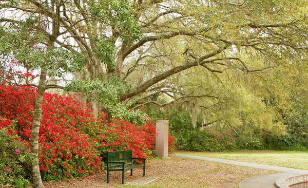Photograph - Bench by Ree Reid