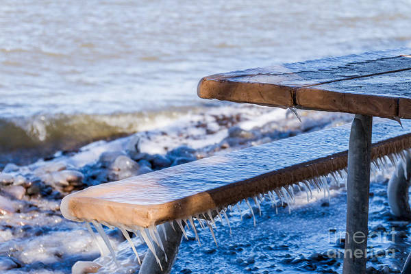 Photograph - Bench Warmer Needed by William Norton