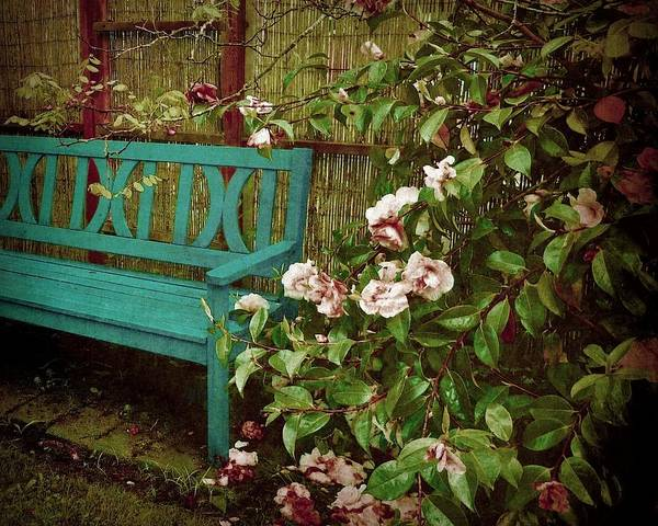 Photograph - Bench With Pink Roses by Patricia Strand