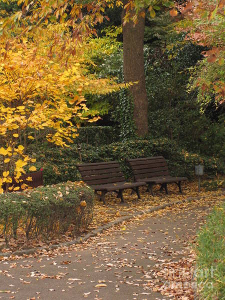 Photograph - Benches In The Park by Eena Bo