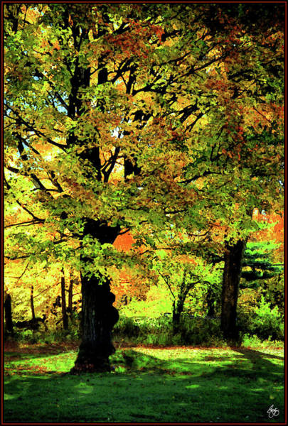 Photograph - Beneath The Maple by Wayne King