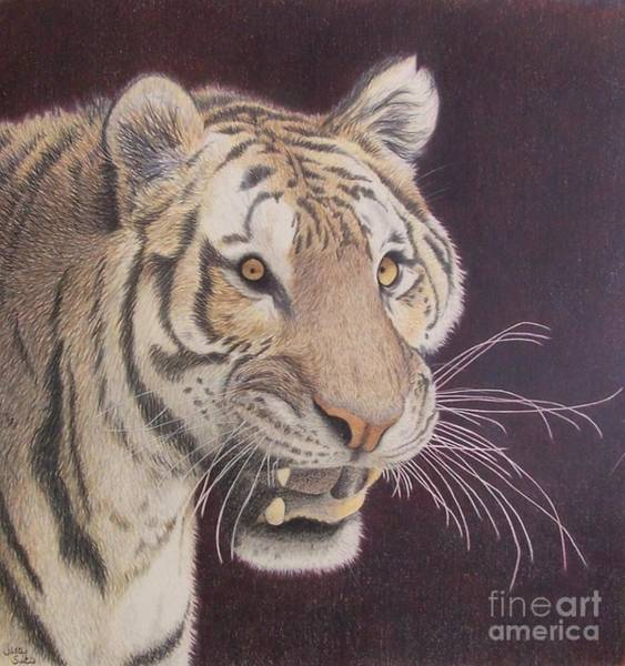Bengal Tiger Drawing - Bengal by Jena Suits