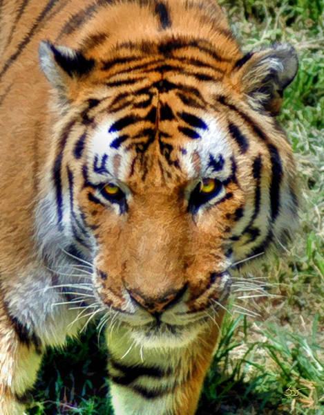 Photograph - Bengal by Sam Davis Johnson