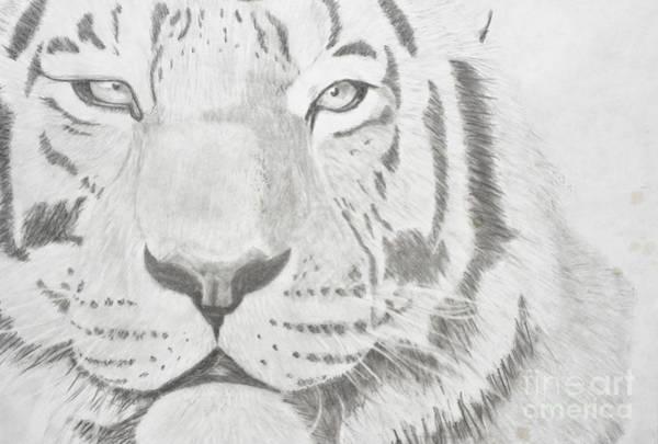 Bengal Tiger Drawing - Bengal Tiger by Adleta