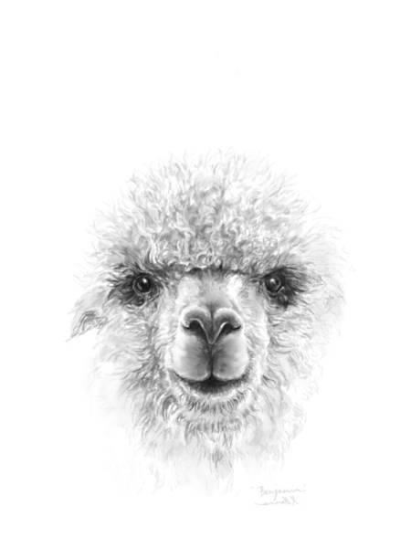 Llama Drawing - Benjamin by K Llamas