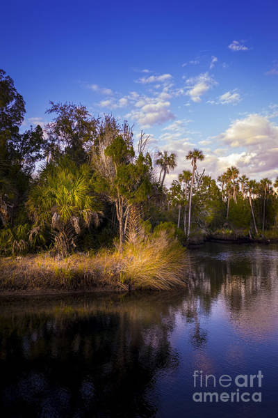Marshland Photograph - Bent Stream by Marvin Spates