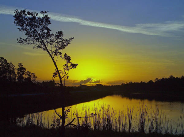 Photograph - Bent Tree Sunrise          by Tom Claud