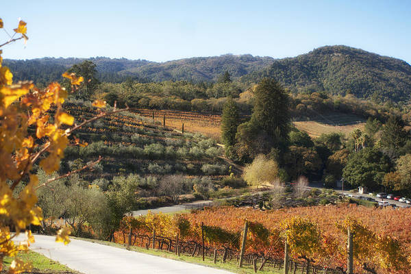 Photograph - Benziger Winery by Michael Hope