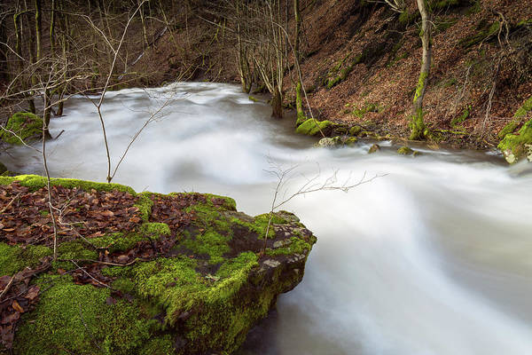 Photograph - Bere, Harz by Andreas Levi