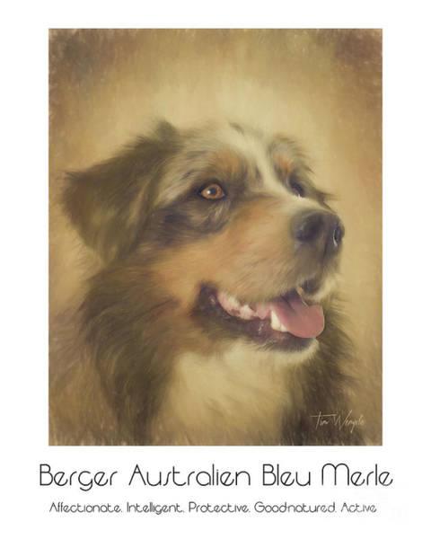 Digital Art - Berger Australien Bleu Merle Poster by Tim Wemple