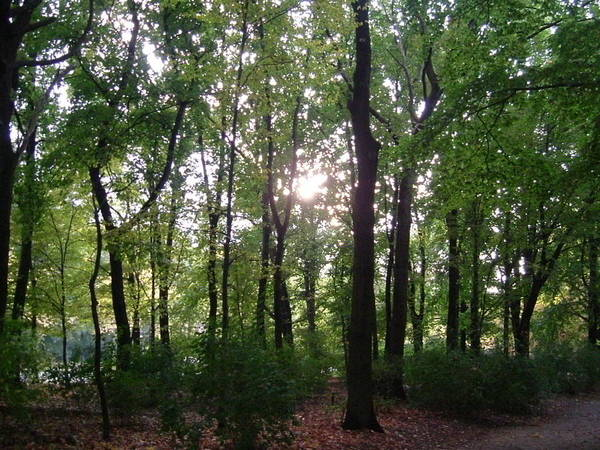 Photograph - Berlin Park Woods by Annette Hadley
