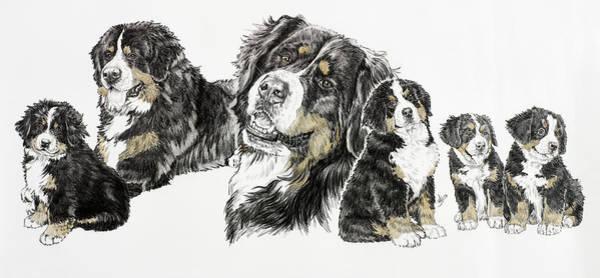 Drawing - Bernese Mountain Dog by Barbara Keith
