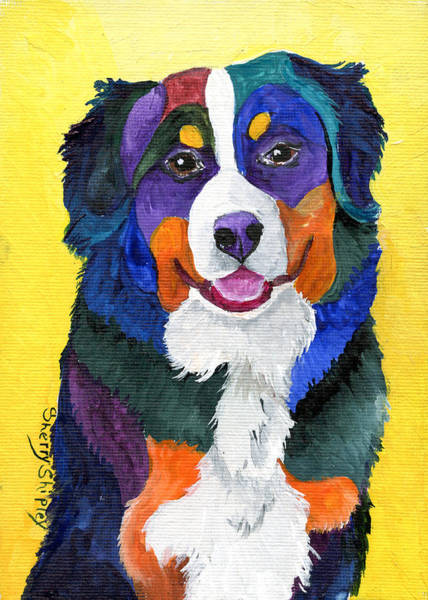 Painting - Bernese Mountain Dog by Sherry Shipley
