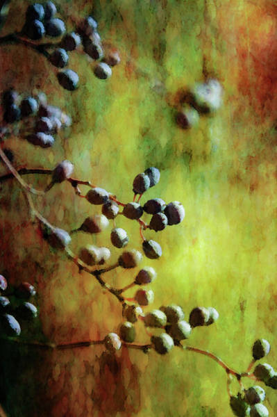 Photograph - Berries 7187 Idp_2 by Steven Ward