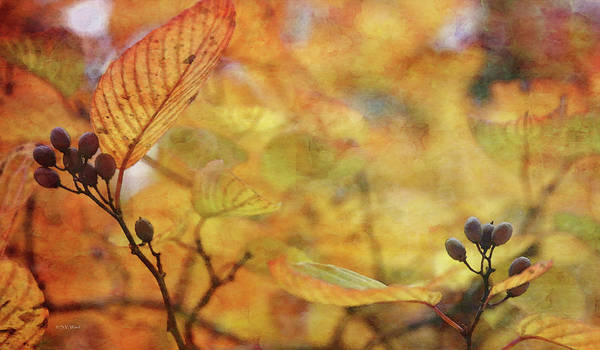 Photograph - Berries Among The Gold 6548 Idp_2 by Steven Ward