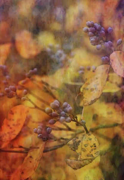 Photograph - Berries Outstanding 6562 Idp_2 by Steven Ward