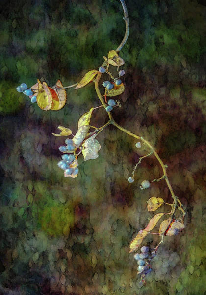 Photograph - Berries Suspended 6051 Idp_2 by Steven Ward