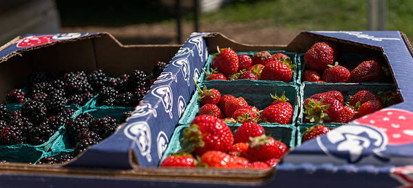 Photograph - Berry Box by Nisah Cheatham