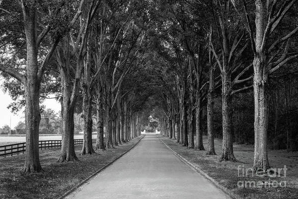 Photograph - Berry College Memory Lane  by University Icons