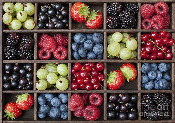 Currants Photograph - Berry Harvest by Tim Gainey